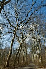 Forêt de la Robertsau