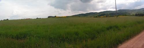 20080513 22571 0903 Jakobus Weg Weite Hügel Wald Ginster_P01