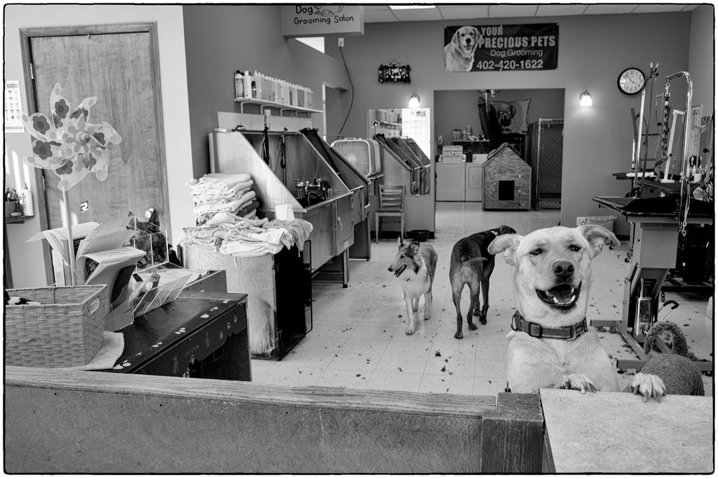 At The Dog Groomer, March 16, 2016