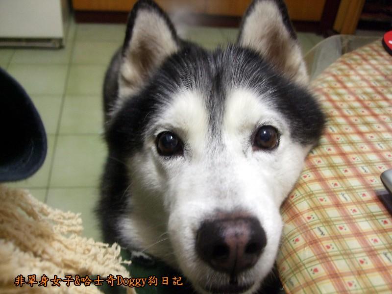 哈士奇Doggy愛狗零食29