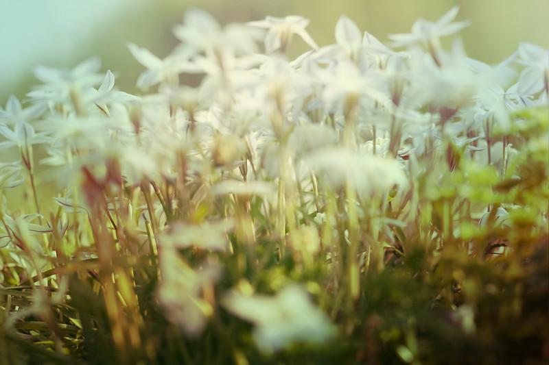blur-dreamy-texture-texturepalace-34