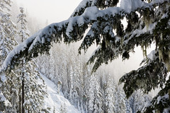 Creekisde gondola surrounded by snowy trees