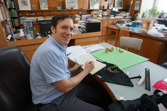 Dr. Williams studying Neolithic remains at the Royal Belgian Institute of Natural Sciences