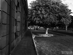 Tree (BNW)