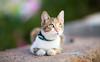 Cute cat, Port de Sóller, December 29, 2015