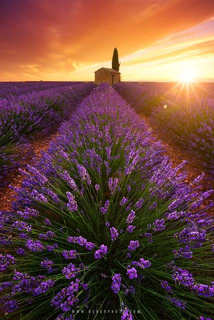 Soul of Provence (France)