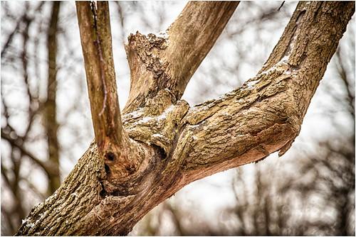 old trees winter snow forest germany deutschland thüringen view thuringia loch wintertime bäume moos februar sicht 2016 landkreis eichsfeld canoneos5dmarkii ef2470f28liiusm