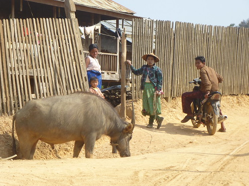 M16-Kyaukme-Palaung-Lwe Sar (8)