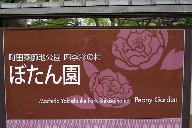 2016/04/10_町田ぼたん園-28