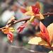 Spring Leaves1