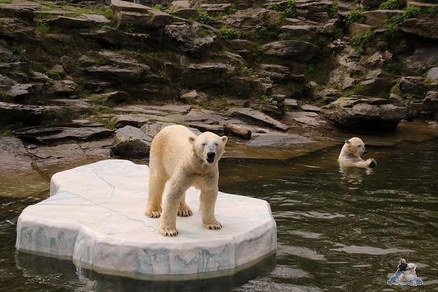 Tierpark Berlin 17.04.2016  044