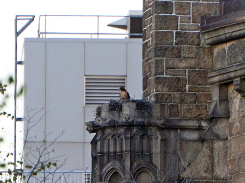 Cathedral Hawk Nest - 7438