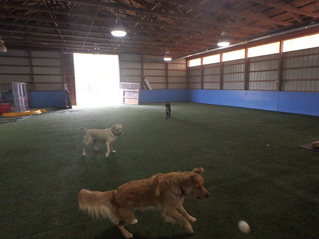 04/28/16 Baseball Fetch! :D