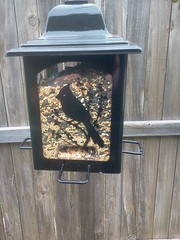 This feeder has a birdseed mix.