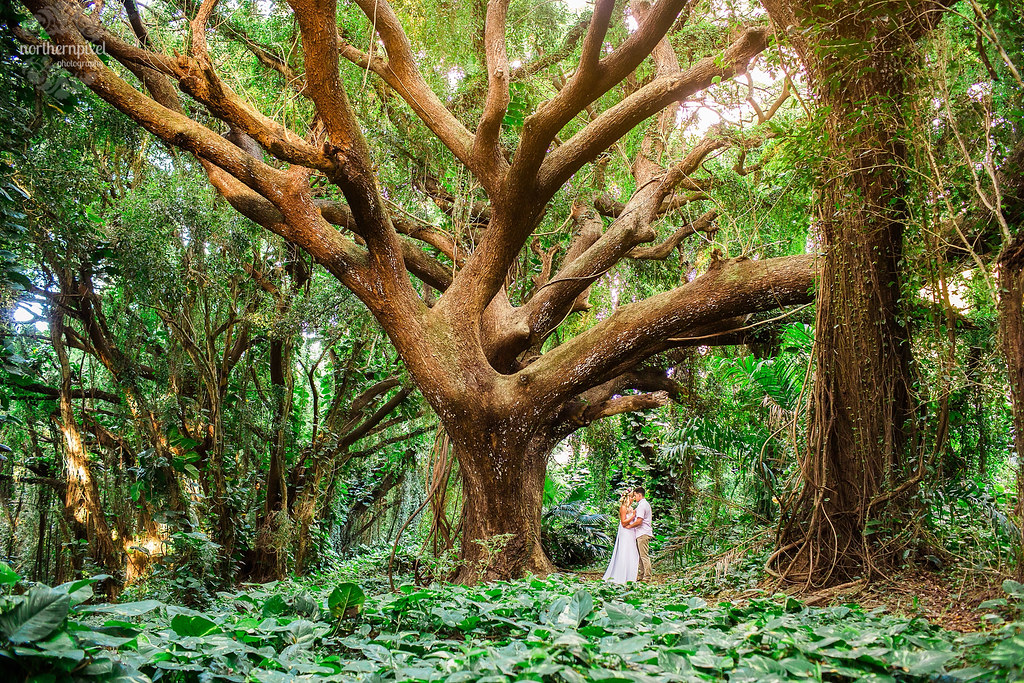 Maui Enchanted Forest Photosession