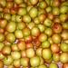 Apple Plum ( আপেল কুল) by abu.khiyum