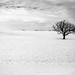 Wintry 5 of 7: Walworth County, Wisconsin by Angela Holm
