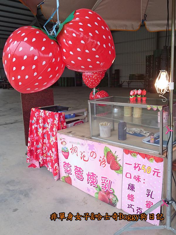 苗栗草莓大湖酒莊清安洗水坑豆腐街10
