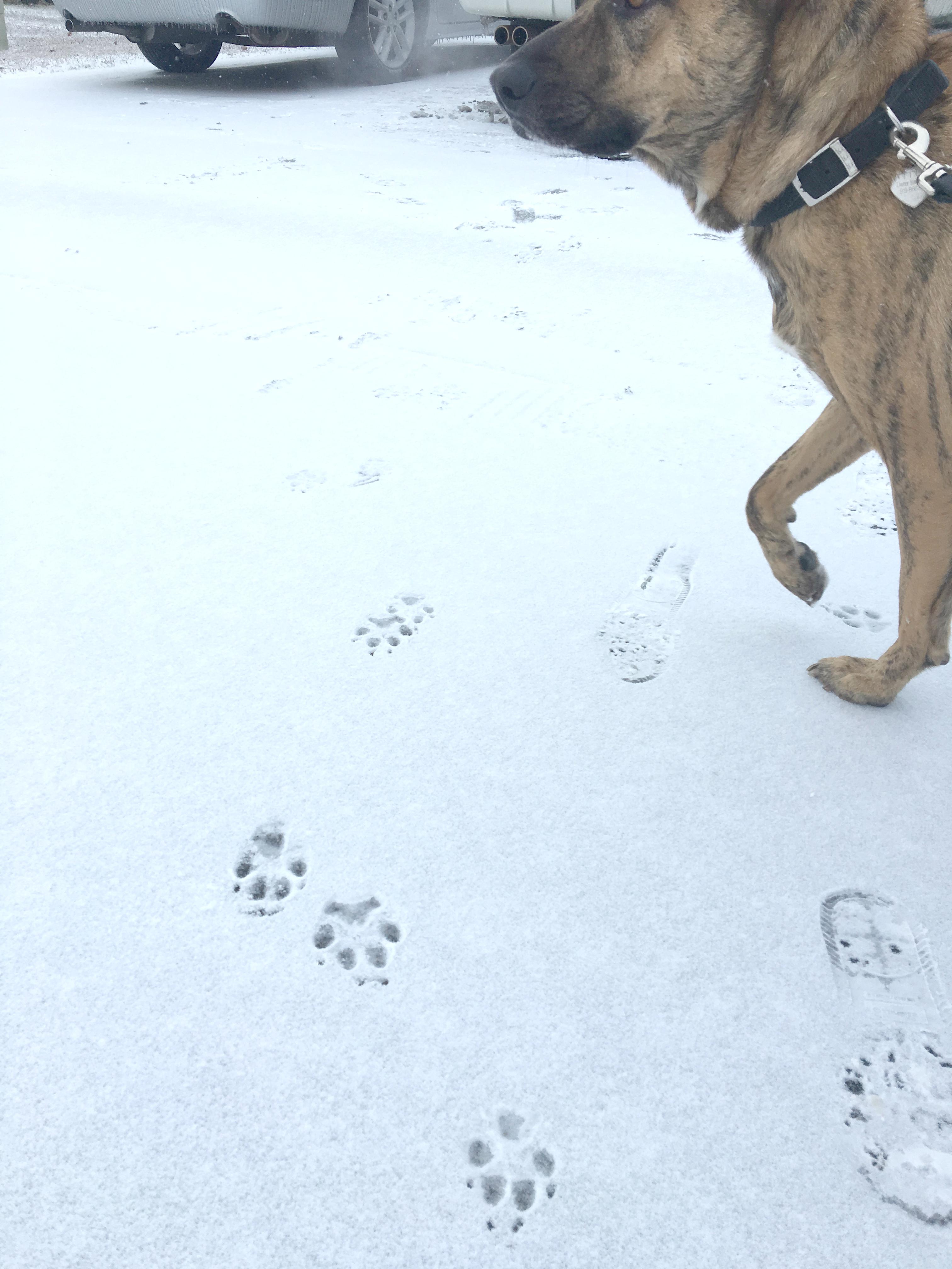 titus snow walk
