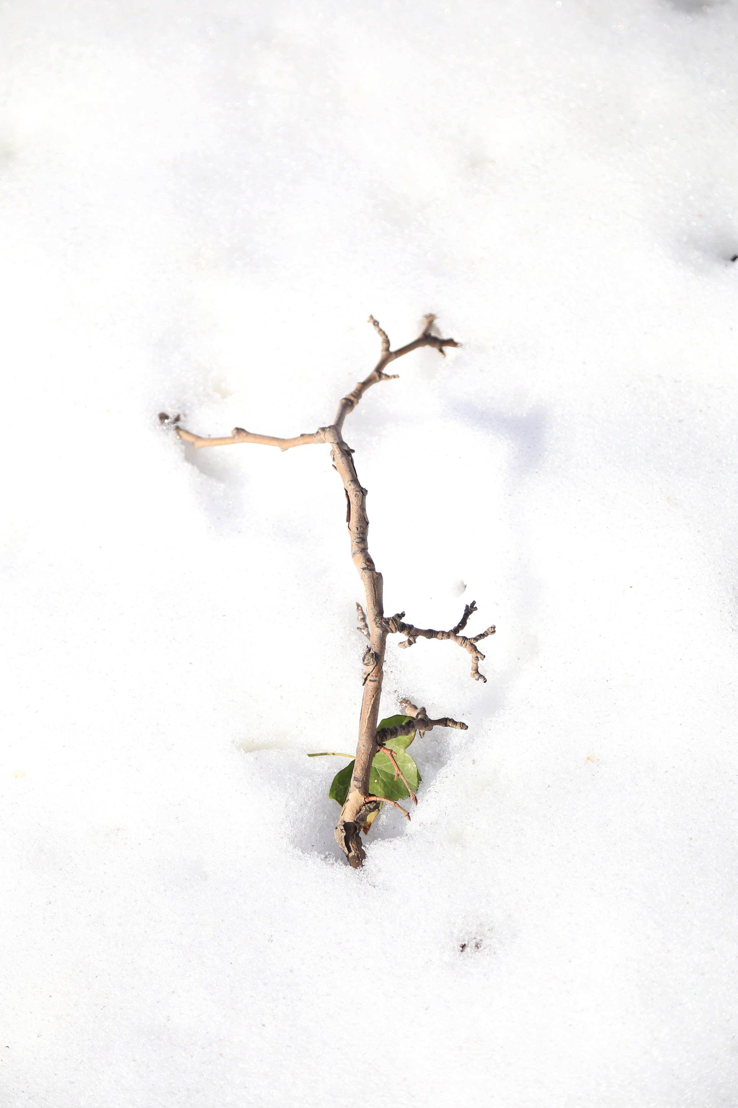 twig-in-the-snow