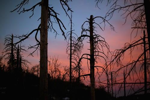trees lake sunrise colorful bare silhouettes stark arrowhead