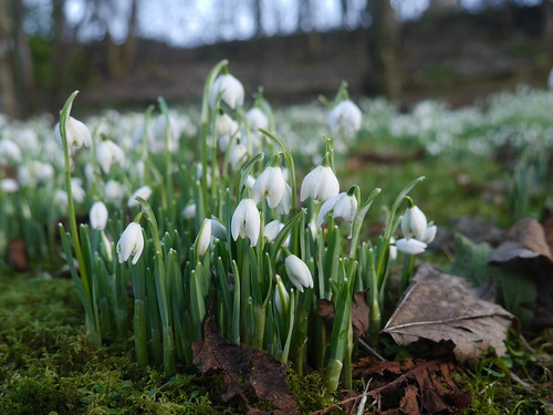 signs of spring | by Susana C. Galli