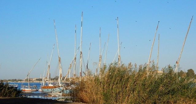 Masts and Birds
