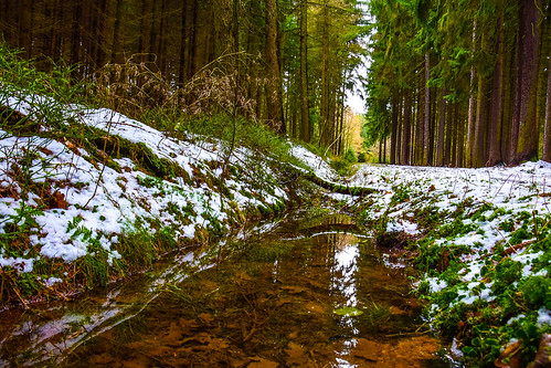 Schmelzwasser am Waldweg