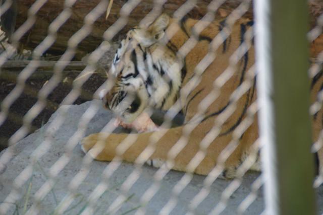 san diego zoo-6