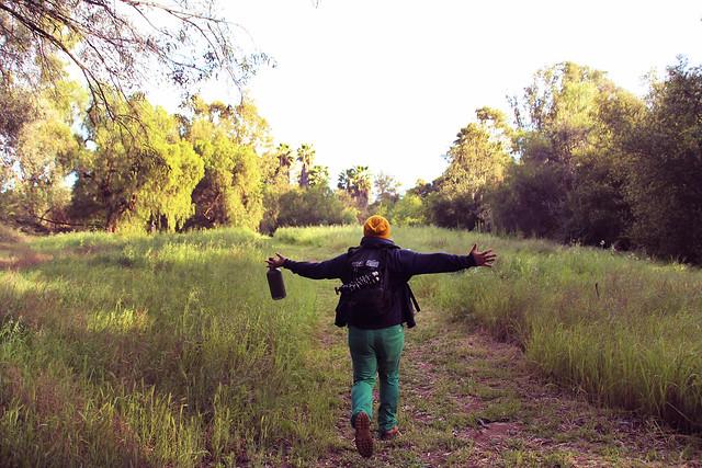 Summer Sage Woods