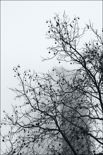 Brouillard, hôtel et sycomore