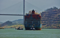 Cargo Ship Going Under the Bridge of the Americas