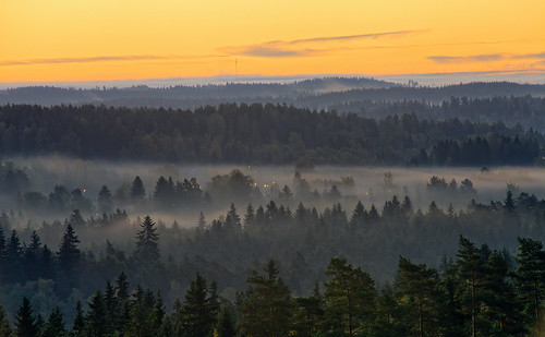 morning autumn orange mist lake tree fall nature weather misty fog forest sunrise finland season landscape countryside haze woods scenery colorful europe glow outdoor vibrant background hill foggy scenic peaceful aerialview calm fantasy silence mysterious mystical glowing magical idyllic hdr mystic
