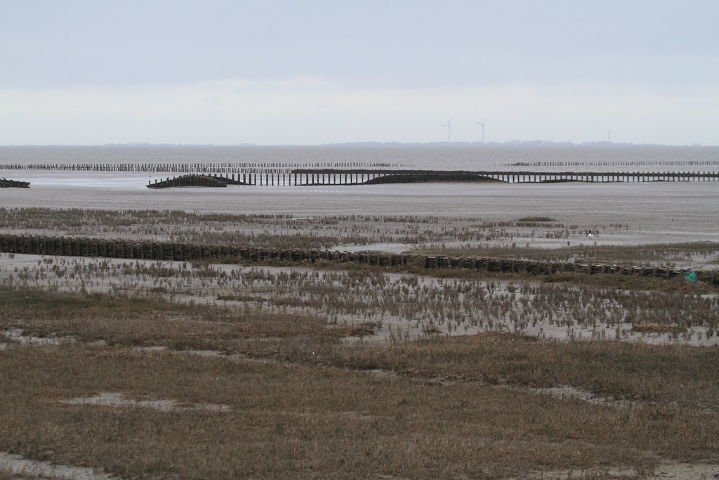 Littoral zone in the Lawersmeer