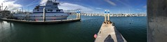 Ventura Harbor Sealion Panorama