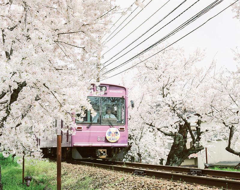 160330-0407 關西:嵐電櫻花隧道
