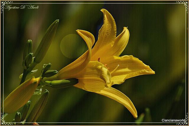 Fiore giallo - Aprile-2016