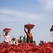 The Chili Farmers