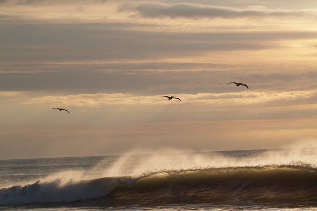 Sunset Flight on the Waves