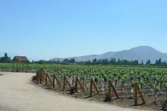 Vina Undurraga - Maipo Valley