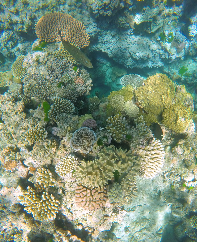 Great Barrier Reef Cairns