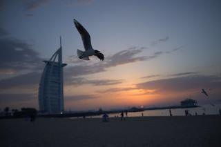 Seagull enjoying Sunset