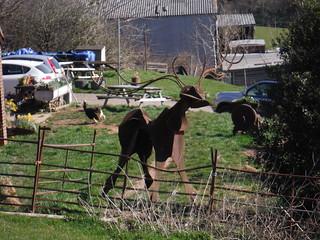 Deer in Garden of Farm by Shrub Wood