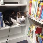Quincy the cat at Fairborn's PAWS to Read program