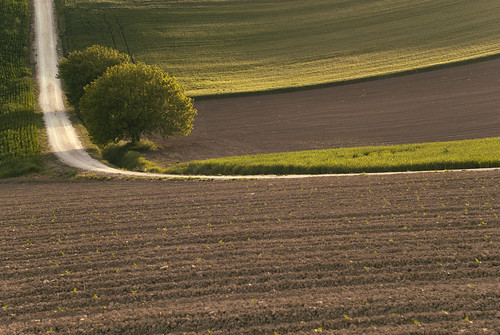 sunset panorama colour tree green nature alberi digital relax landscape 50mm golden countryside spring haze nikon outdoor country campagna hour nikkor f18 sole recanati marche d60