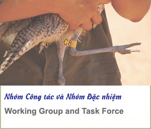 working group and task force