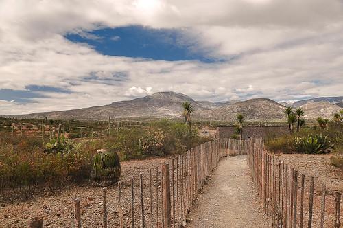 San Juan Raya - Turritelas (50)