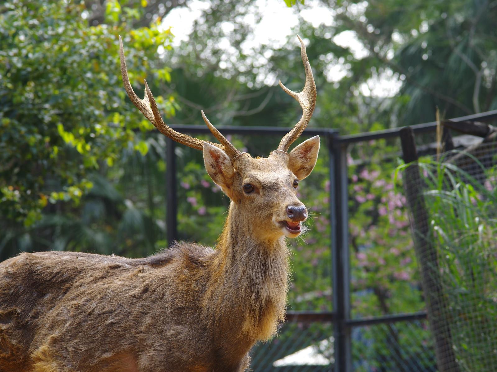 645D 新手試拍試貼-新竹市立動物園雜拍