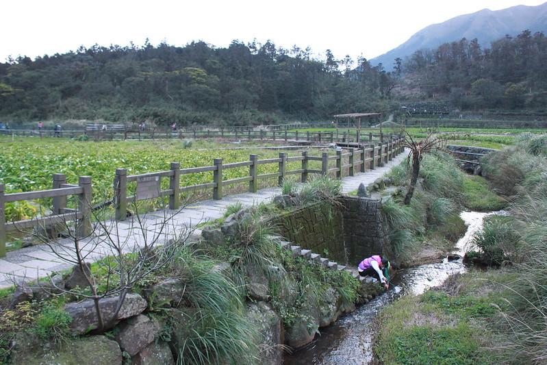 竹子湖採海芋-17度C隨拍 (93)
