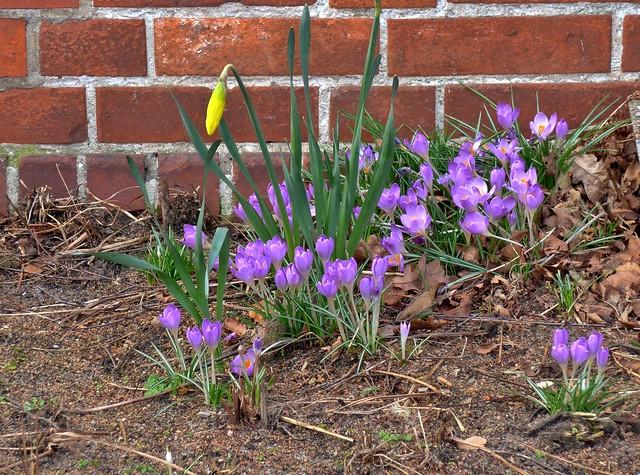 Frühlingsboten***Messengers of spring